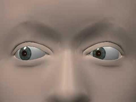 Ocular muscles